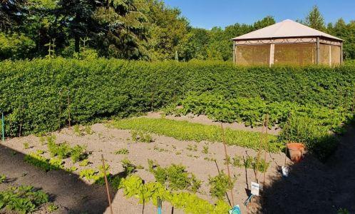 De cottage tuin – een oase van rust