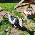 Kinder lieben die Tiere auf unserem Hof
